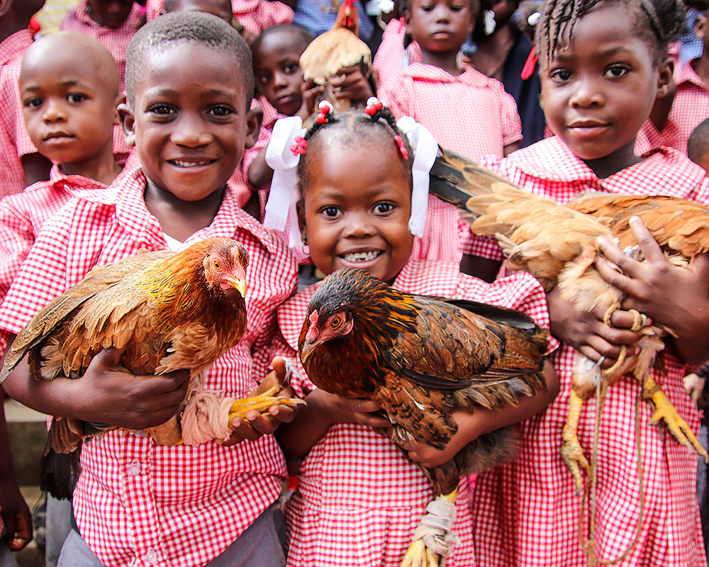 Haiti-Hesse-Chicken-main-Star-of-Hope.jpg